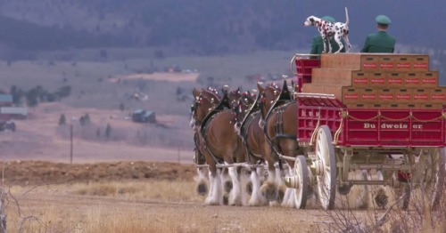 Clydesdale horses pulling a wagon.