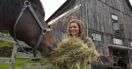 Woman feeding hay to a brown horse.